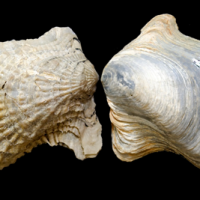 Reconciling History and Science through the Fossils of Natchitoches, Louisiana