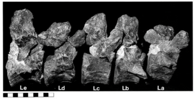 Images of the N. jonesi fragments