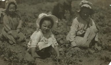 Child workers in a sugar beet field in Sugar City, Colorado, 1915