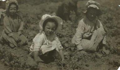 Child workers in a sugar beet field in Sugar City, Colorado, 1915