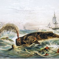 Ahab's Historicism: Changing Whale Behavior in History