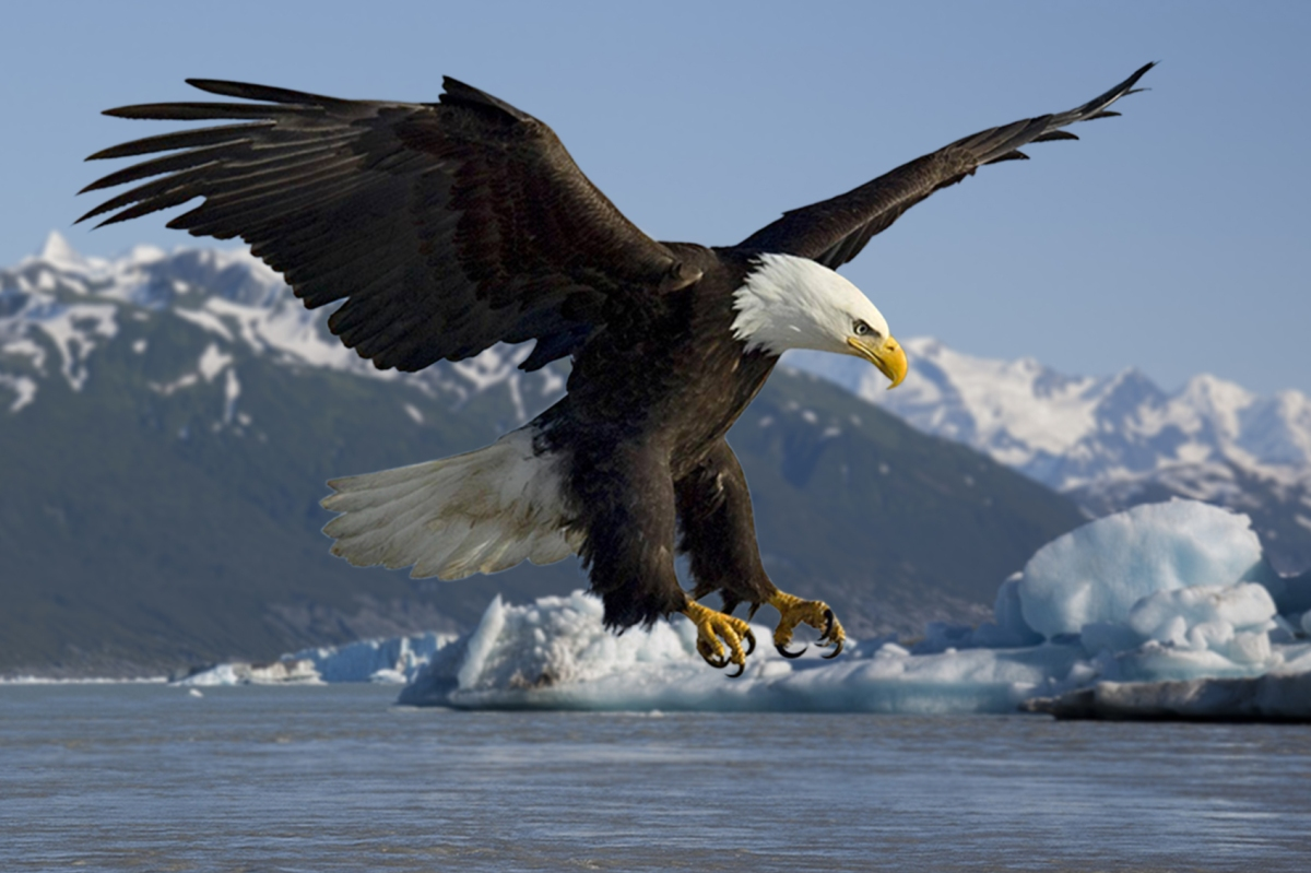 Symbolic Conservation: The Plight of the Bald Eagle