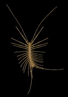 Centipede Top V
