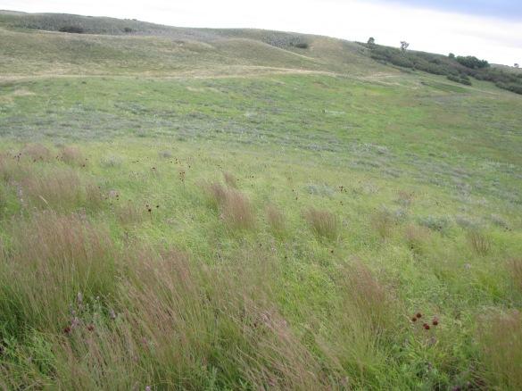 Landscape_Sullys_Hill_National_Game_Preserve_Fort_Totten,_North_Dakota_(5789616425)