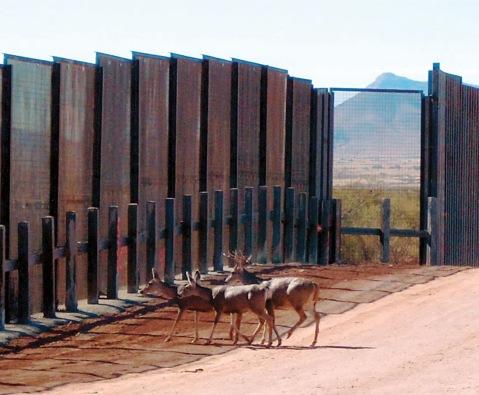 sonoran pronghorn border